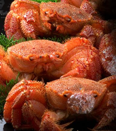 虎杖浜産「幻の毛蟹」が30セット限定の赤札市!